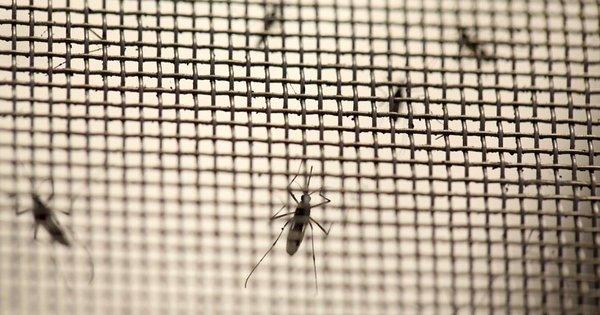 lưới ngăn muỗi, côn trùng